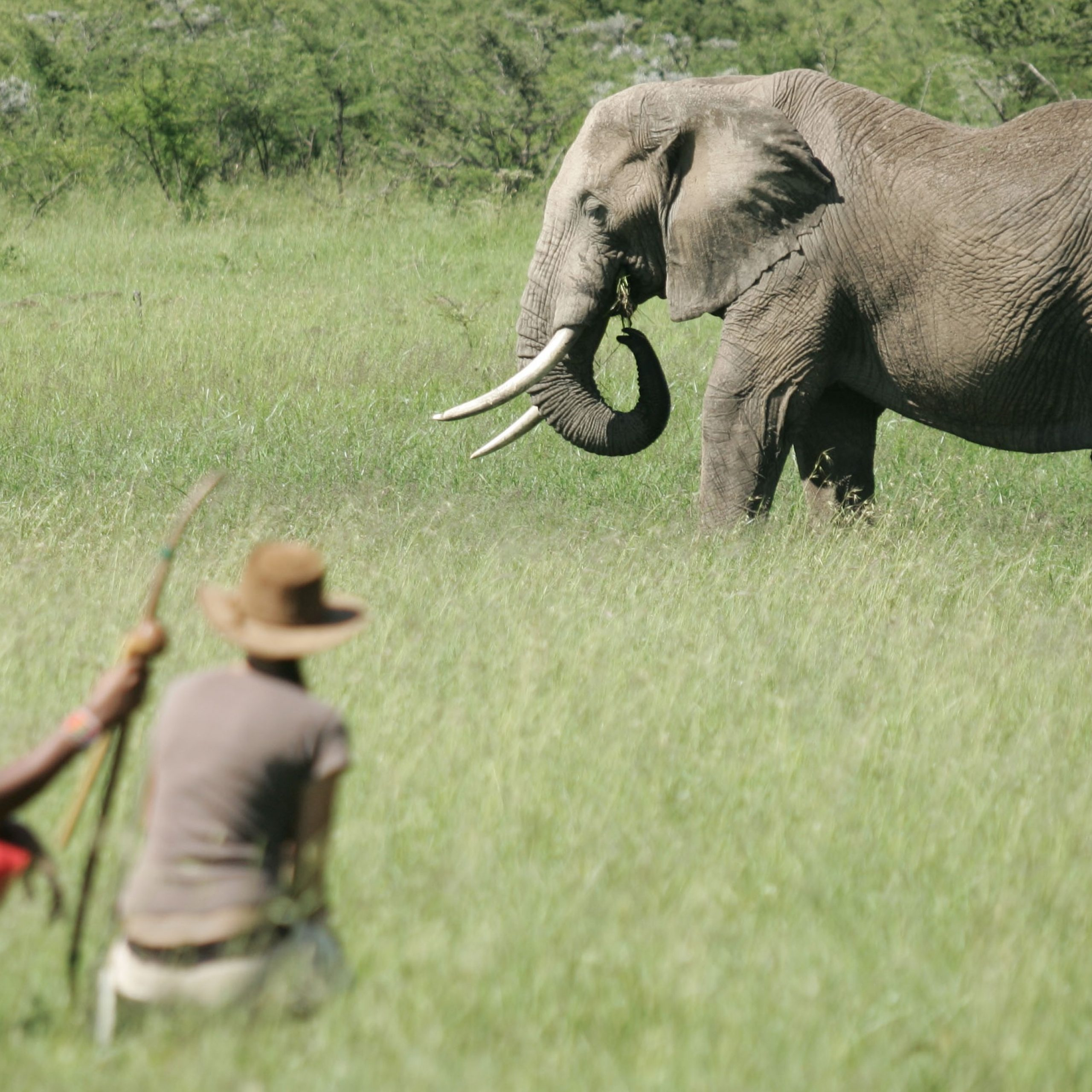 Day 10: Visits to Ol Chorro Conservancy and Mara Elephant Project