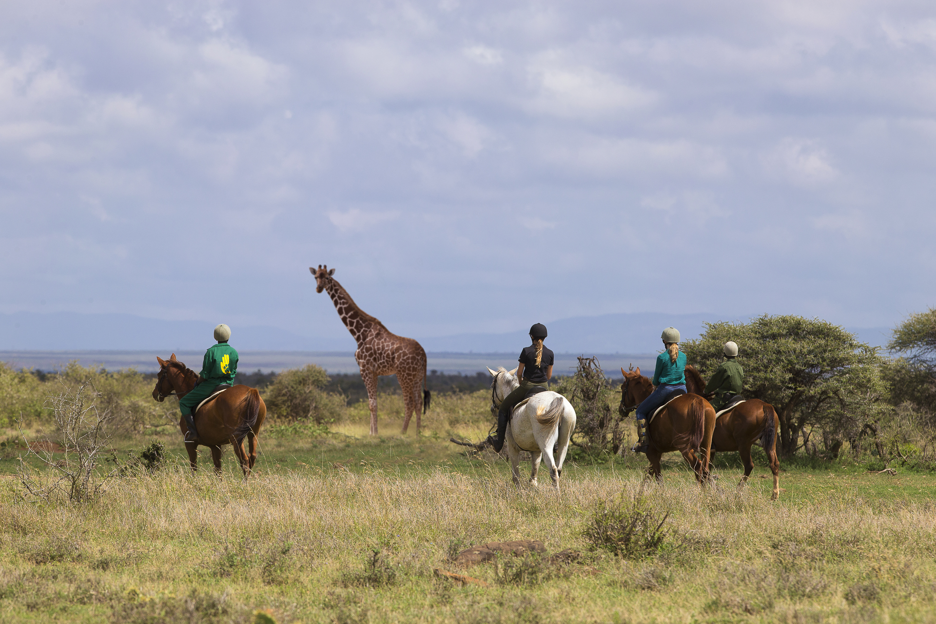 Day 01: Arrival and onto Loisaba Conservancy