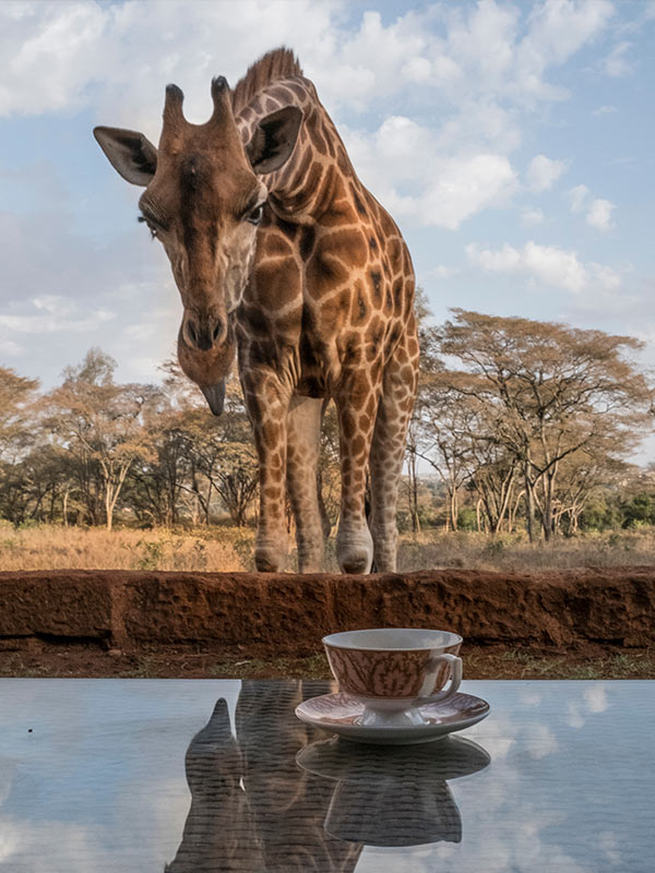 Day 08: Giraffes and more!
